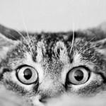 Criminalización del maltrato animal