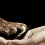 Ley de Protección y Bienestar Animal: ¿Otra ley más de defensa de los animales?