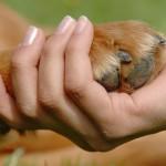 Lo bueno, lo malo y lo feo de la  Ley de Protección y Bienestar Animal, Ley Nº 30407