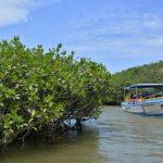 Efeméride del día 26 de Julio: Día internacional de conservación del Ecosistema de manglares
