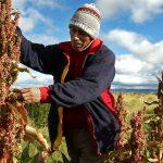 Claves para salvaguardar el patrimonio cultural inmaterial de los pueblos indígenas