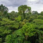 El avance de la normativa forestal y la influencia del contexto internacional en la formación de políticas públicas: Algunos problemas identificados