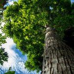 El Ministerio del Ambiente y su intervención en la protección de los bosques y promoción de los servicios ecosistémicos forestales