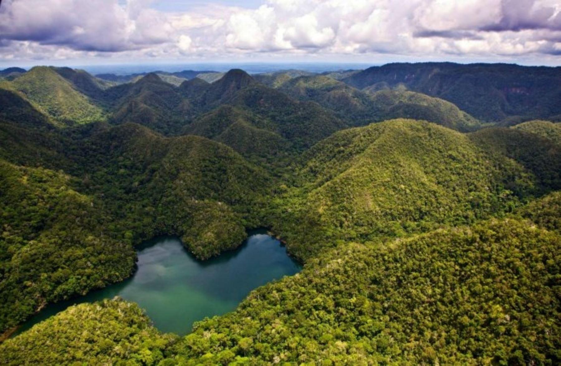 Los servicios ecosistémicos forestales de almacenamiento de carbono (REDD +) en el Perú
