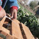 Reflexiones sobre el Estado de la Cuestión en materia de trabajo infantil y trabajo forzoso en el Perú